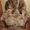 Продам Кресла 2 шт #978510