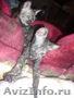 донские сфинксы - Изображение #3, Объявление #81353