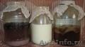 Молочный гриб,  Морской рис,  Чайный гриб рассылка по всей России