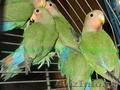 Животные, попугаи
