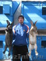 кролики фландр бельгийский, французский баран, белый бускат, серебристые, калифоша