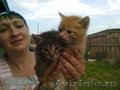Подарю котят-очаровашек