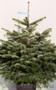 Датская новогодняя елка