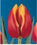 Тюльпаны из Красноярска к 8 марта 2018 года - Изображение #3, Объявление #1001617