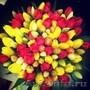 Тюльпаны оптом в Красноярске к 8 Марта!