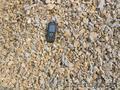 Декоративная крошка каменная - Изображение #3, Объявление #1048112