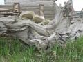 малые архитектурные формыдля сада коряги корни