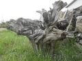 малые архитектурные формыдля сада коряги корни - Изображение #2, Объявление #1048117
