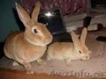 продам кроликов чистых пород