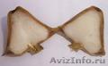 Водяной орех (рогульник, чилим), семена - Изображение #2, Объявление #1310741