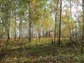 Участок 20 соток в п.Минино,  с лесом