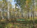 Участок 20 соток в п.Минино, с лесом - Изображение #2, Объявление #1497947