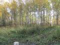 Участок 20 соток в п.Минино, с лесом - Изображение #3, Объявление #1497947