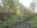 Участок 20 соток в п.Минино, с лесом - Изображение #4, Объявление #1497947