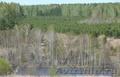 Земельный участок 10 соток  в Емельяновском районе - Изображение #6, Объявление #1218103